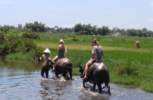 Hoi An Water Buffalo Cart Experience