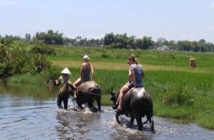 Hoi An Water Buffalo Cart Experience