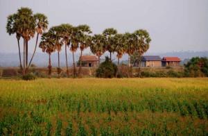 cambodia-kratie-countryside-3