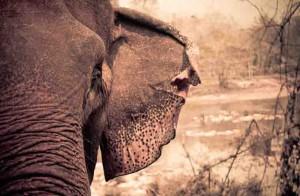 laos-elephant-tour-5