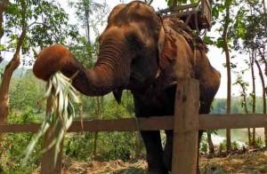 laos-elephant-tour-6