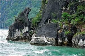 vietnam-dog-stone-halong-bay