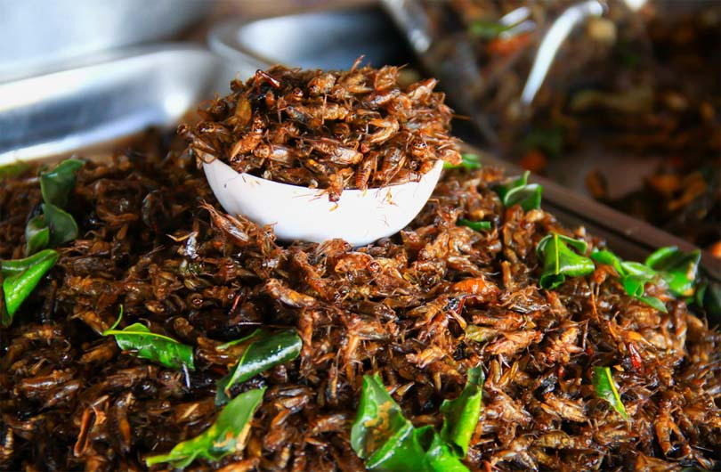 Myanmar Crickets